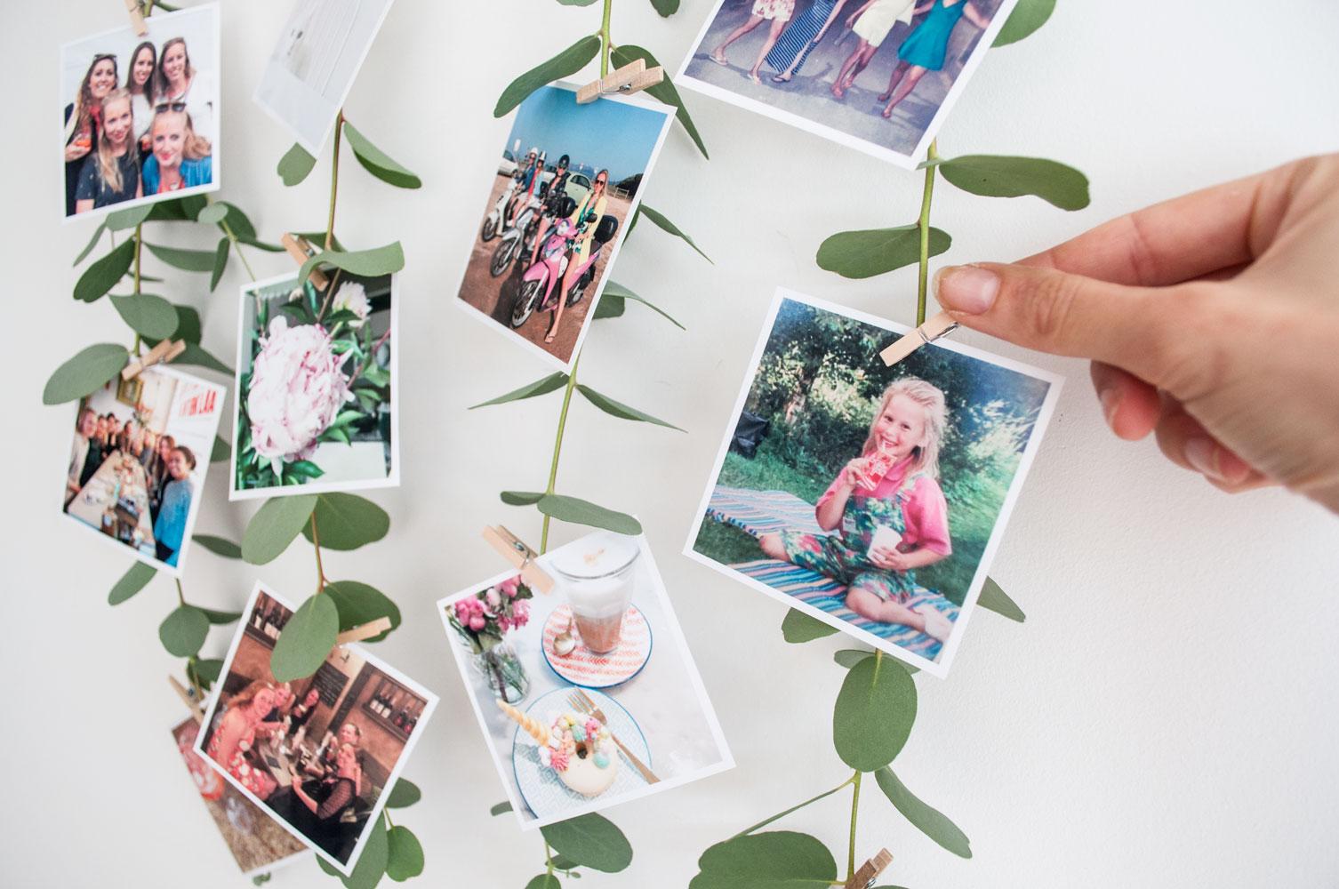 foto muurhanger eucalyptus fotoklemmen