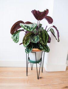 plantenpot verf sfeer