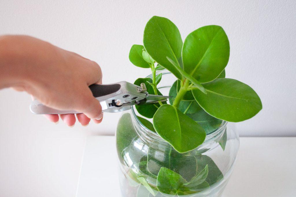 planten stekken kopstek knippen