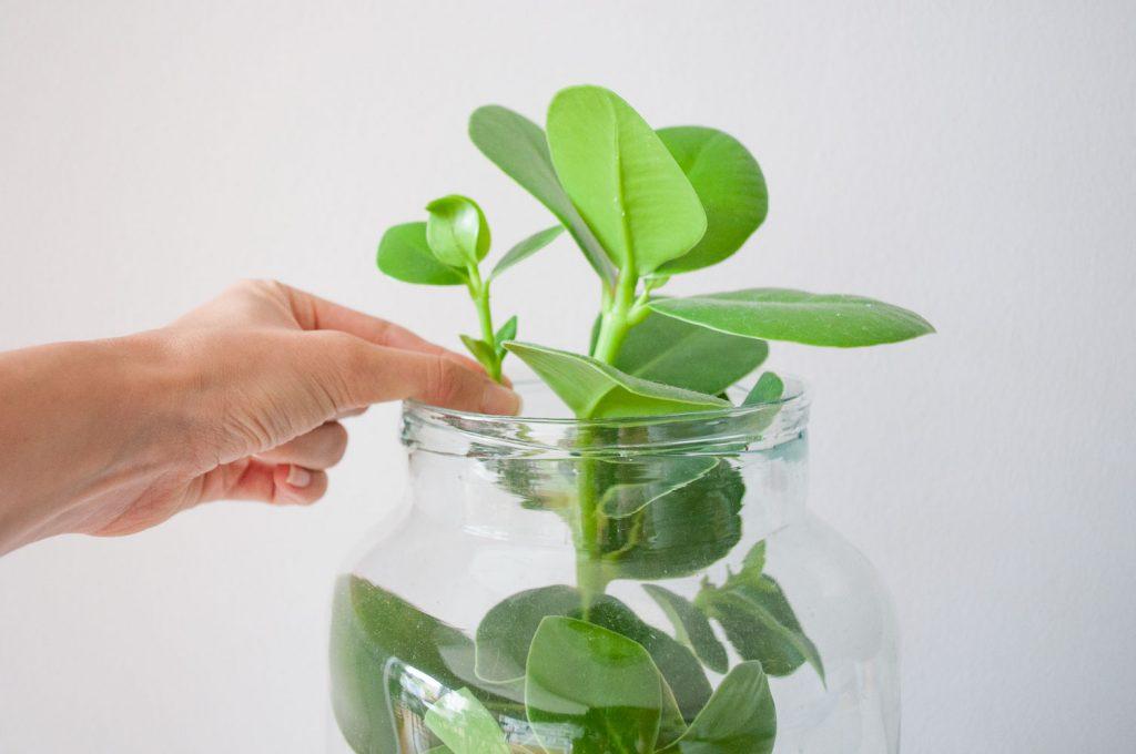 planten stekken kopstekken