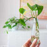 planten stekken sfeer vierkant