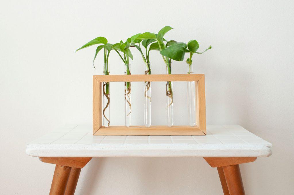 stekjes in vaasjeshouder plantentafel